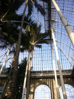 Royal Botanic Gardens Edinburgh Temperate Palm House interior