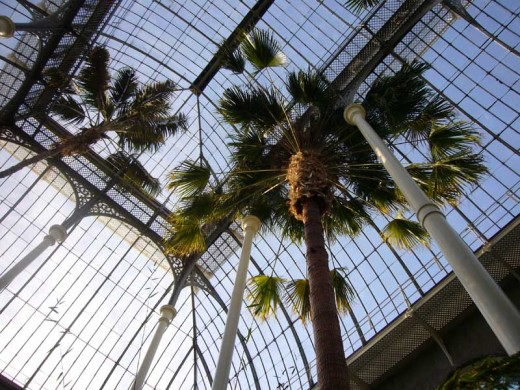Royal Botanic Gardens Edinburgh Temperate Palm House