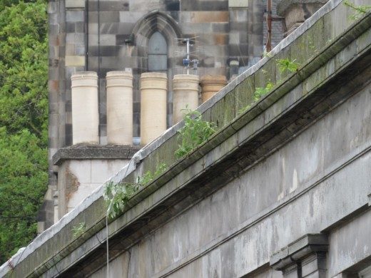 Vegetation growing on stone ledge causing decay - Edinburgh World Heritage Guidance