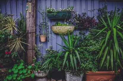 Tips on Grow and Gardening for Gorgeously Green Pot Plants