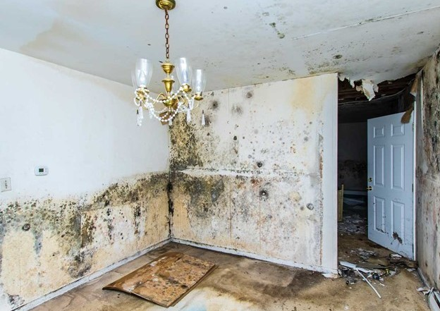 DIY Water Damage and Black Mould Remediation in Bethesda