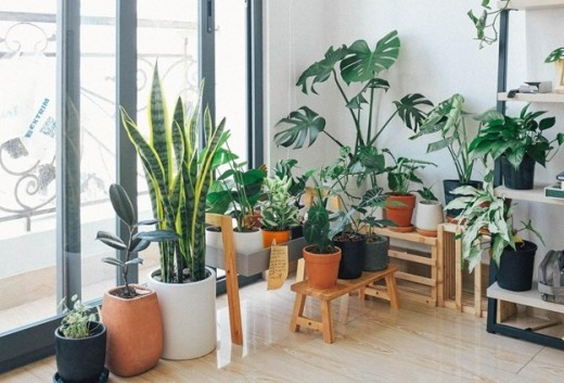 Transform Your Home Into a Green Paradise