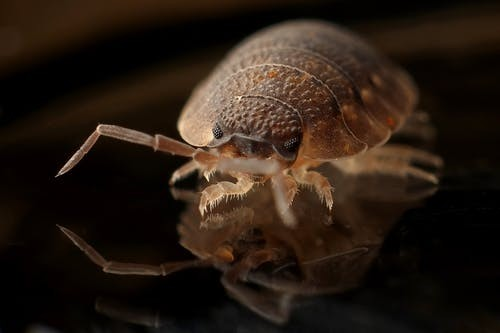 5 myths about bed bugs